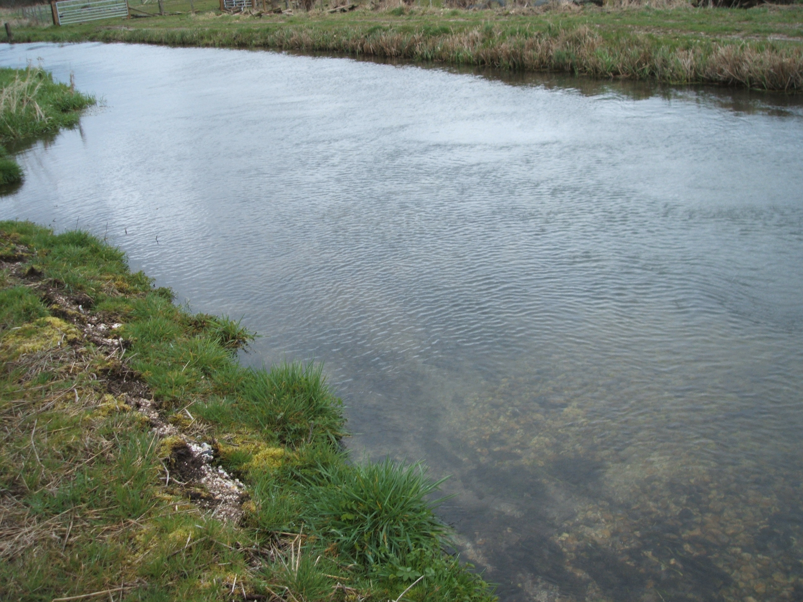 A tributary of the River Itchen at Winchester