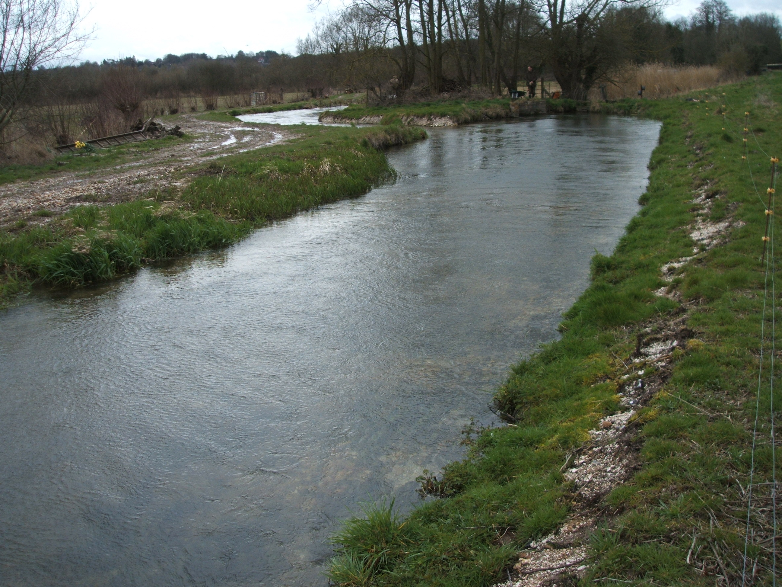 A modified tributary of the River Itchen